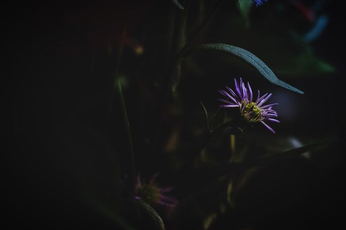 Night Illuminated No People Purple Light Celebration Arts Culture And Entertainment Nature Plant Glowing Event Flowering Plant Close-up Copy Space Outdoors Firework Sky Dark Flower Lighting Equipment