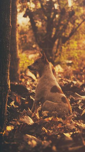 Close-up of dog sitting on autumn leaves