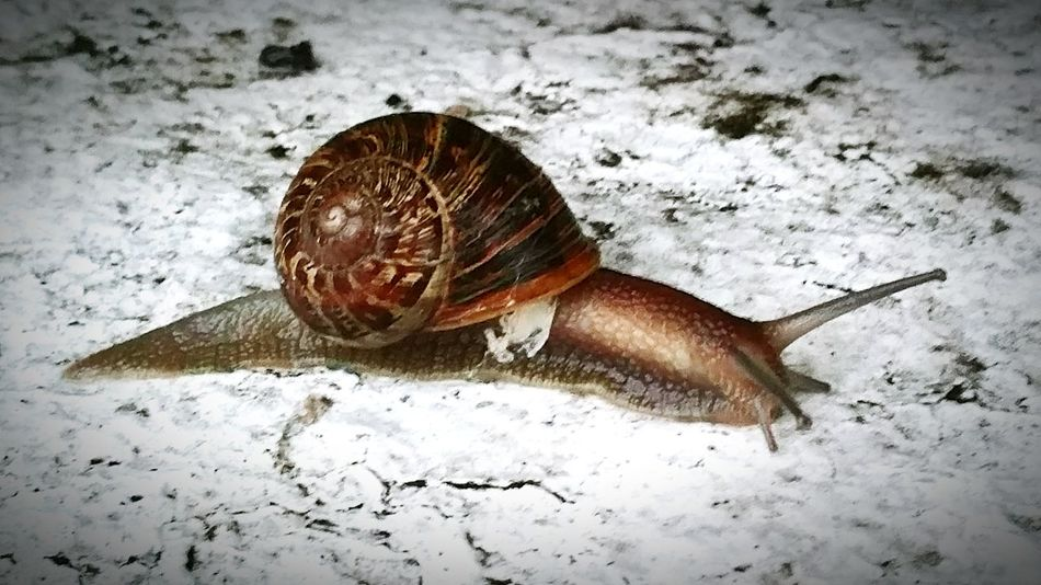 RePicture Growth RePicture Challenge Snail Snail Collection London Rainy Morning Snails Pace Slow Life Slow Slow And Steady Slow Pace