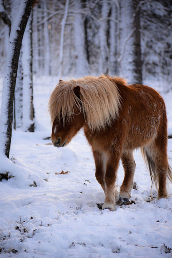 Horse on snow covered field