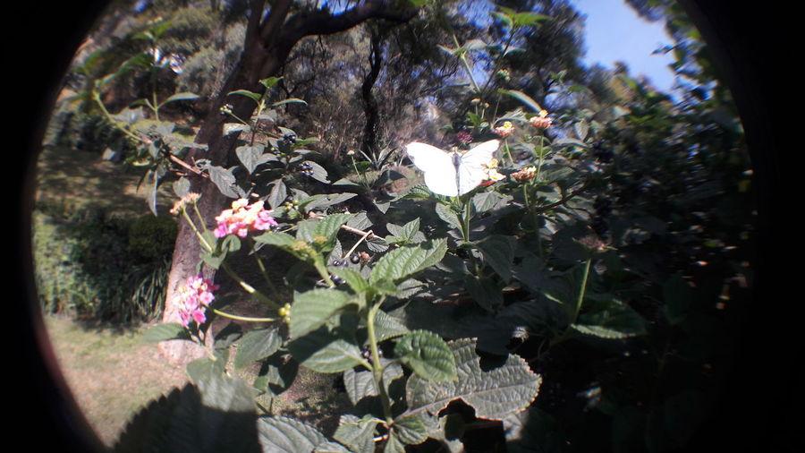 Mariposa En La Naturaleza Plants 🌱 Arboles , Naturaleza City Mexico <3 Nature Flower Day Grass