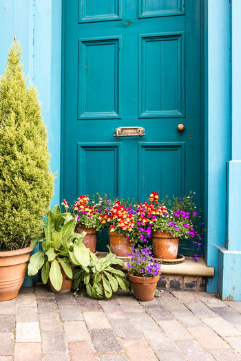 Blue door with pot plants on the door step at Blists Hill Victorian Blue Door Pot Plants Architecture Building Building Exterior Built Structure Closed Day Door Door Step Doorway Entrance Flower Flower Pot Flowering Plant Green Color Growth House Houseplant Nature No People Outdoors Plant Potted Plant Wood - Material