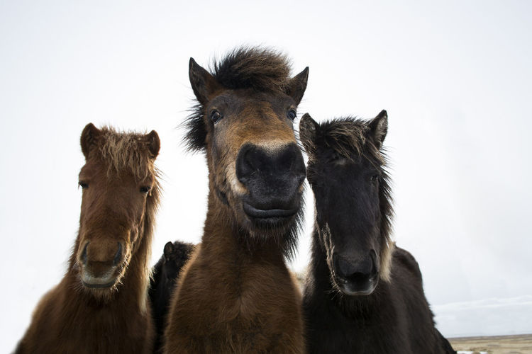 Close-Up Of Horses Against Sky