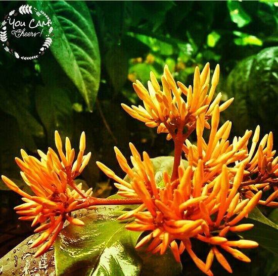 Underwater Nature UnderSea Sea Life Coral Beauty In Nature Close-up Plant No People Flower Head Animal Themes Day Outdoors Freshness Click By You Cam ...