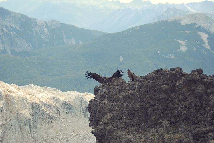 Vultures perching on mountain