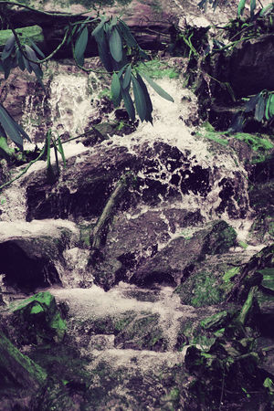 Beauty In Nature Close-up Day Freshness Growth Leaf Nature No People Outdoor Photography Outdoors Plant Rock - Object Water Waterfall