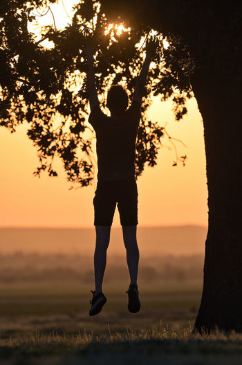 Rear view of silhouette man hanging on tree against sky during sunset