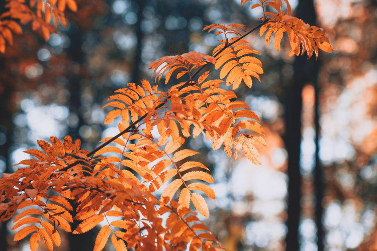Low angle view of autumn leaves on tree