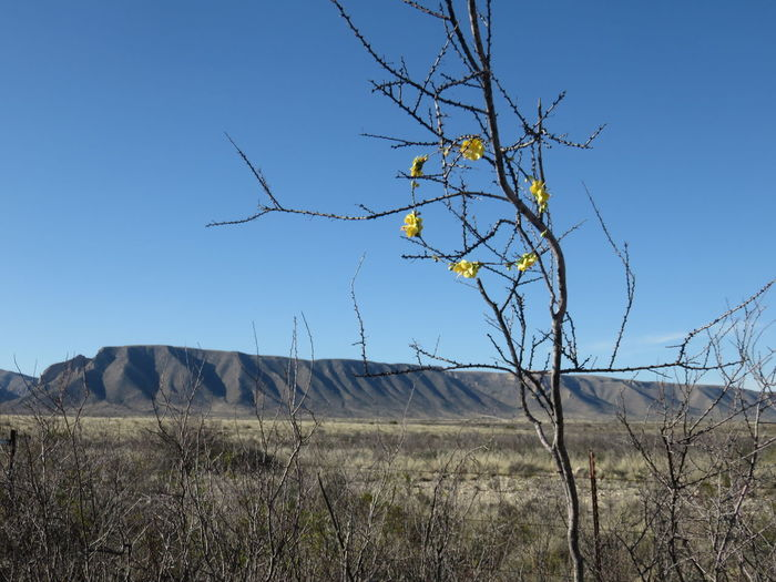 Bare Tree Beauty In Nature Blue Clear Sky Day Field Flower Halo Grass Growth Land Of Enchantment Landscape Mountains Nature New Mexico No People Outdoors Plant Remote Rural Scene Scenics Sky Tranquil Scene Tranquility United States USA