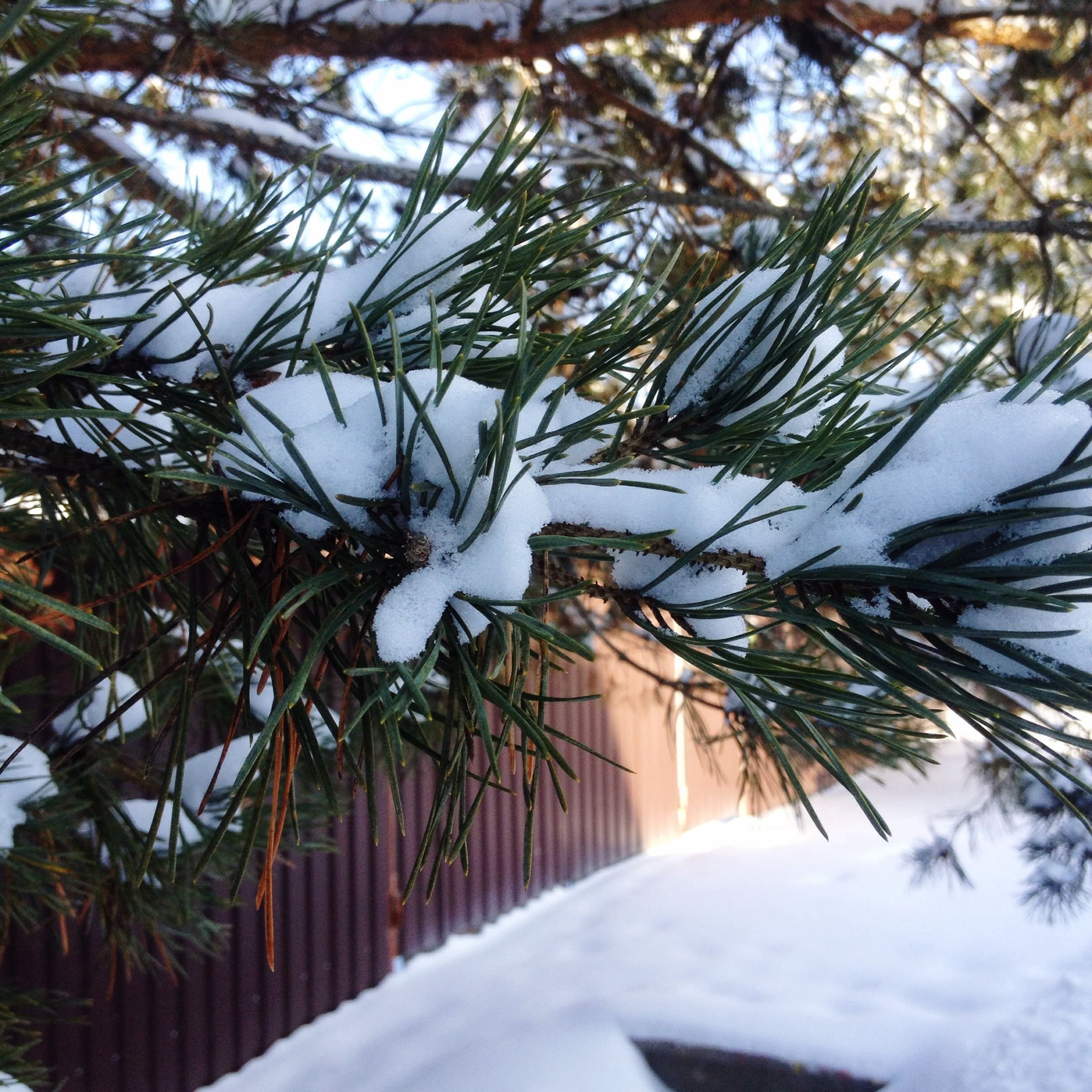 tree, snow, winter, cold temperature, white color, building exterior, built structure, architecture, the way forward, season, branch, road, growth, day, nature, diminishing perspective, covering, street, outdoors, no people