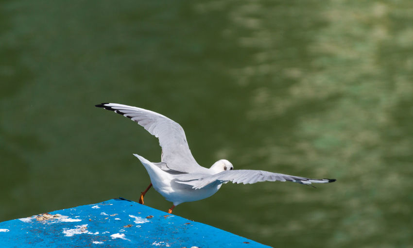 Close-up of bird flying against water