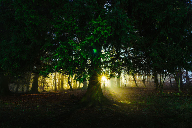Tree Nature Beauty In Nature Night No People Green Color Growth Tranquility Outdoors Scenics Illuminated Sky Nature Landscape Forest Grass Beauty In Nature Tree Bare Tree Live For The Story