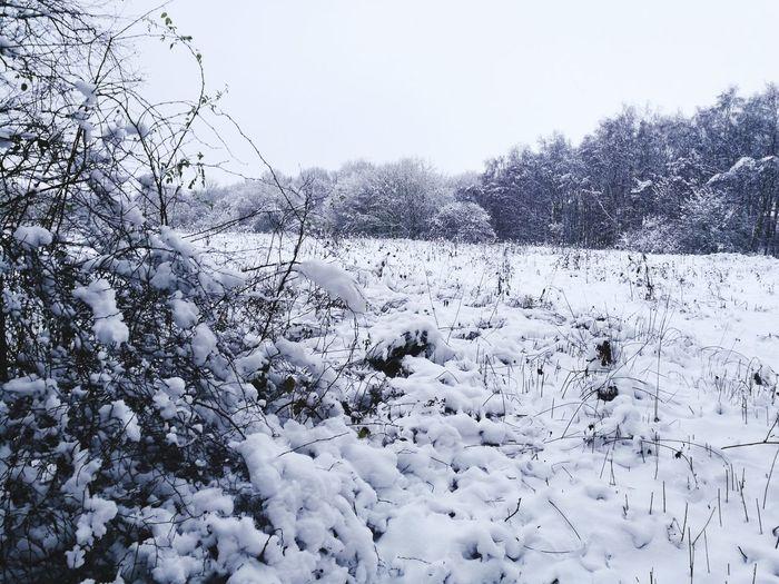 Wintertime Winter Wonderland Winterscapes Winter 2017 Winter Silence No People Beauty In Nature Frozen
