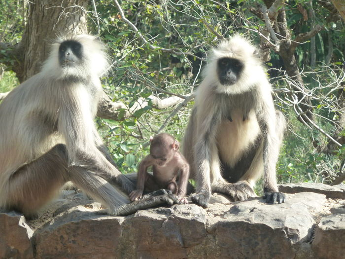 Primate Animal Wildlife Group Of Animals Mammal Animals In The Wild Sitting Vertebrate Two Animals Togetherness Nature People Animal Family Day Young Animal Tree Outdoors Care
