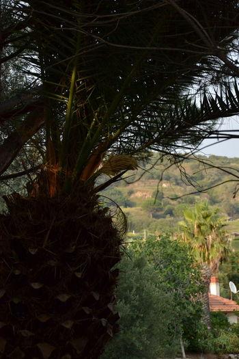 Palm trees on landscape