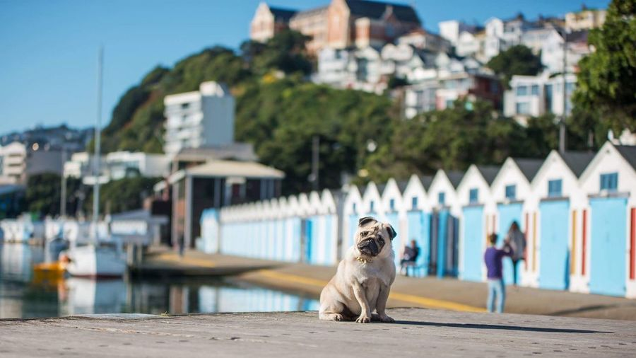 I love these cute boat sheds EyeEm Selects Dog Pets One Animal Building Exterior Built Structure Architecture Outdoors Beach Town Water Animal Themes Domestic Animals Harbor Sea City Sitting Day