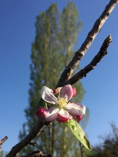 Flower Fleur Bourgeons Nature Tree Arbre Petal Pétales Beauty In Nature
