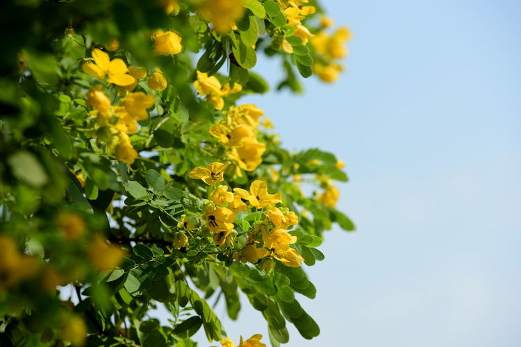 Close-Up Of Yellow Flowering Plant Against Sky