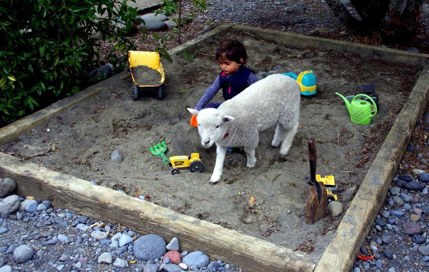 Cute Pets Feeding Animals Feeding Calfs Feeding Lamb Lambs Life On A Fam Newzealand North Island Picturesque Raetihi Snapshots Of Life Travel Photography