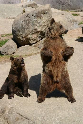 Close-up of bears