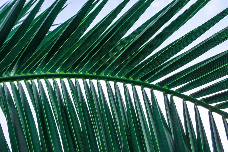 Palm leaf. summer natural background. poster design. plant pattern