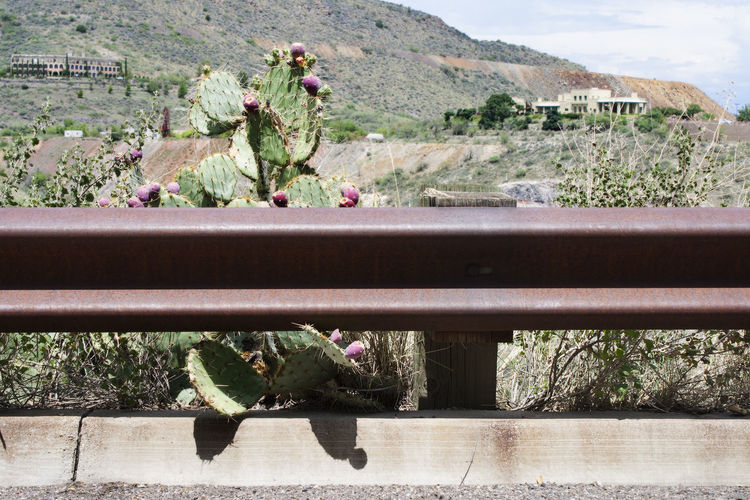 Cactus growing on field by railing