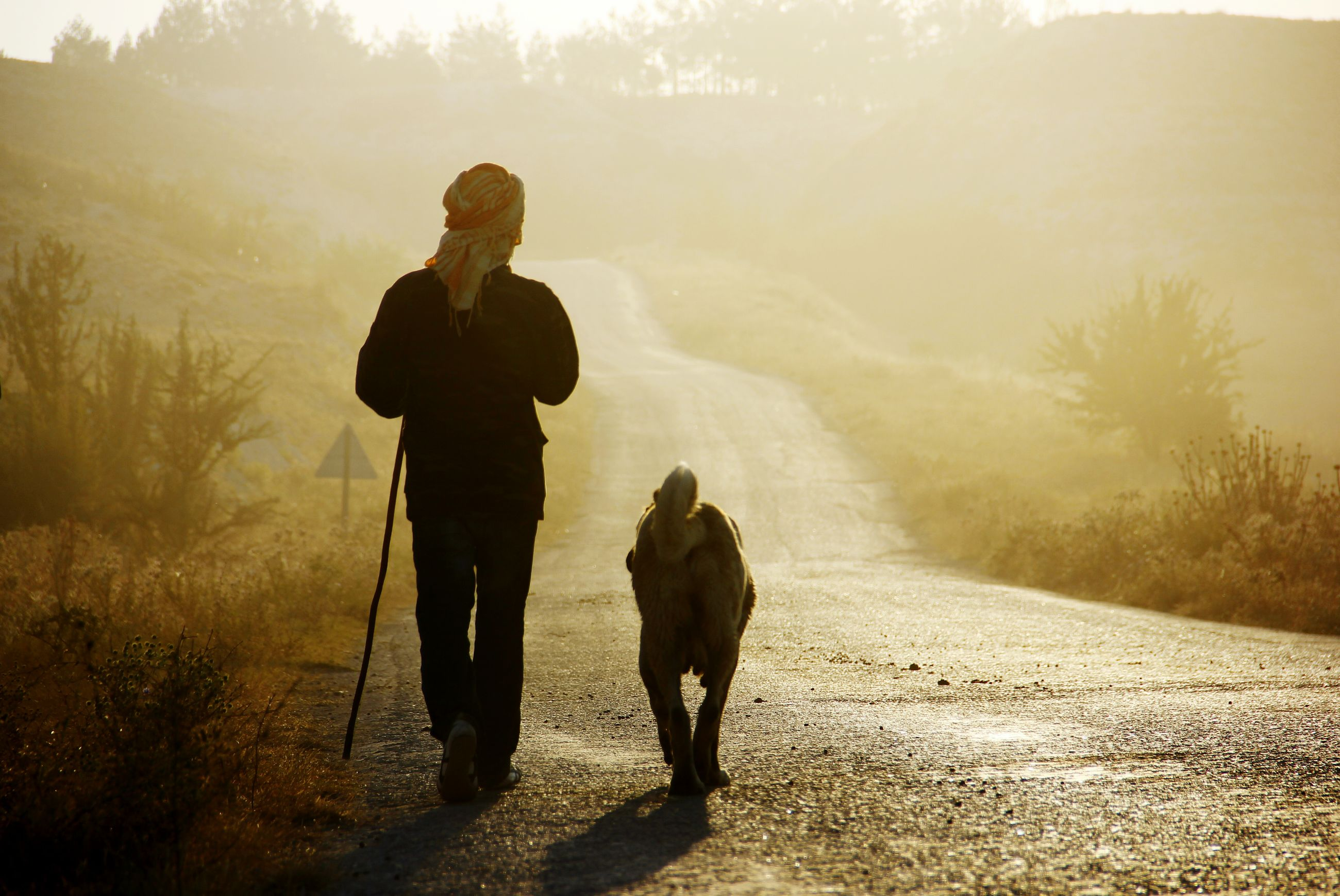 full length, lifestyles, leisure activity, togetherness, men, bonding, walking, rear view, love, standing, nature, landscape, friendship, field, silhouette, mammal