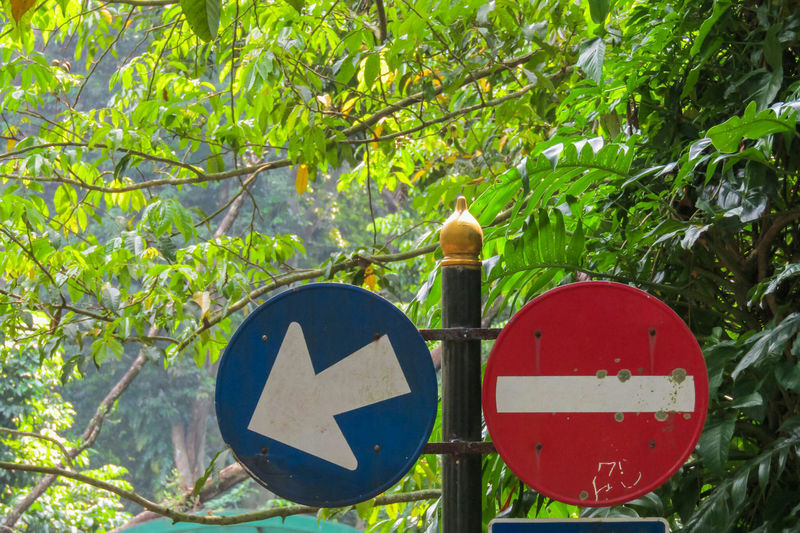 Pole with signs against tree branches