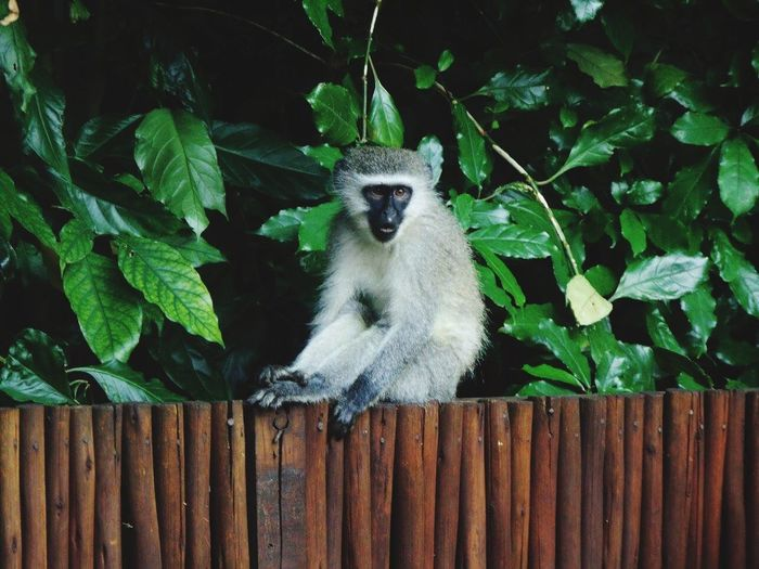 Monkey Chilling No Cares  South Africa Nature Morning Relax Life In The Morning Loving The Natural World
