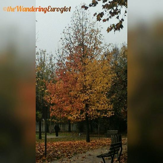 Cinquanta sfumature di foglie / Cinquante nuances de feuilles / Fifty Shades of Leaves Rovigo Rovigram Igersrovigo Vivorovigo Vivoveneto Vivo_italia Tree Tree_magic Autunno  Automne Autumn Fall Otoño Gold Leaves Nature Naturegram Instanature Instagood Albero Natura Foglie Arbre Feuilles Fiftyshades followme follow instadaily picsoftheday