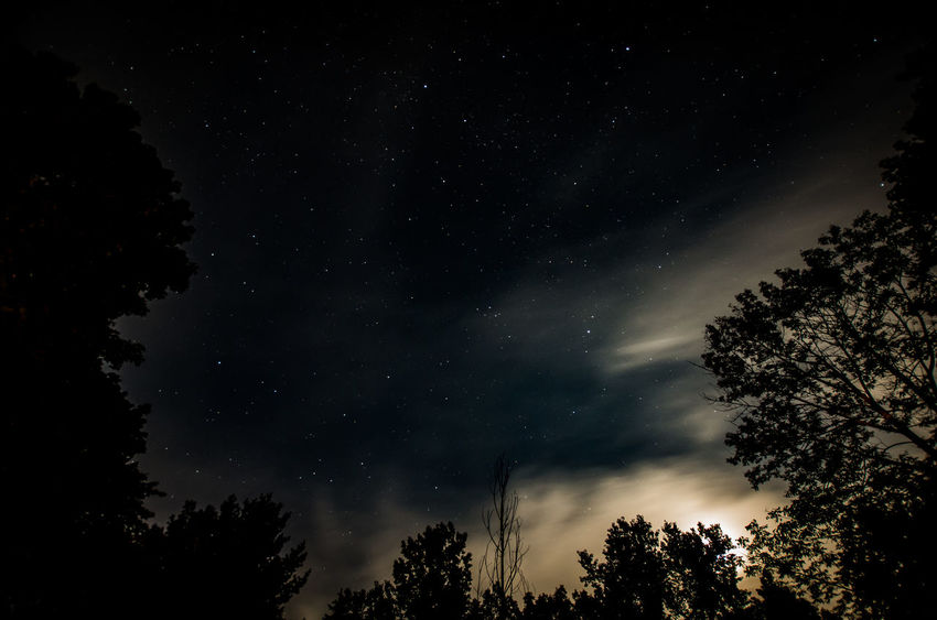 Astronomy Beauty In Nature Galaxy Growth Low Angle View Nature Night No People Outdoors Scenics Silhouette Sky Star - Space Starry Tranquil Scene Tranquility Tree