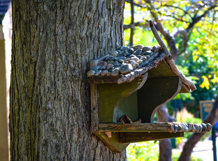 Beauty In Nature Bird Birdhouse Day Nature Outdoors Tree Tree Trunk Zoo