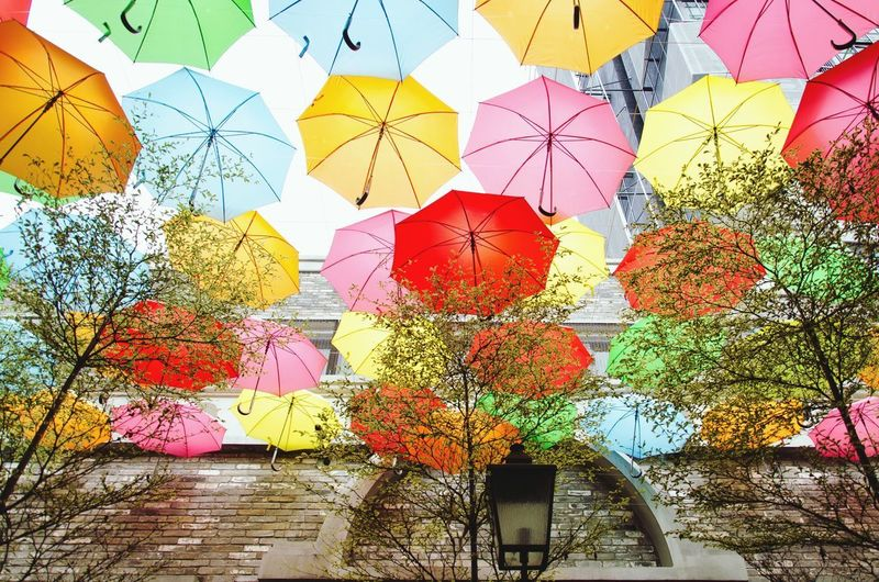 Low angle view of multi colored umbrellas hanging on tree