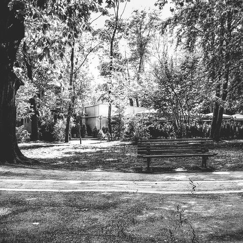 Just a bench. Taking Photos EyeEm Bnw Blackandwhite