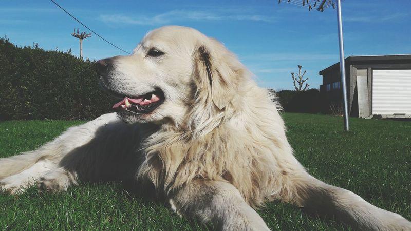 One Animal Dog Noucka Dog❤ Sun Friends Dogslife