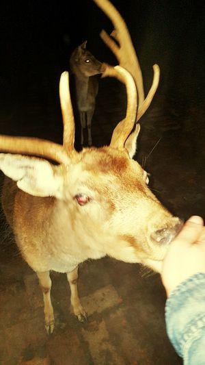 One Animal Animal Themes Outdoors Taboriste Ezi Croatia Deer Human Hand Pets Animal Head  Animal Eye