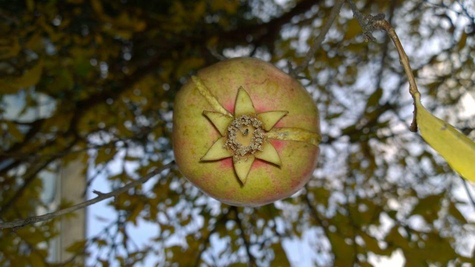 @talhacimsit için çekildi Eye4photography  Eye Best Shot Healty Food Colors EyeEm Best Shots EyeEm Best Shots - Nature Autumn Nature_collection Natural