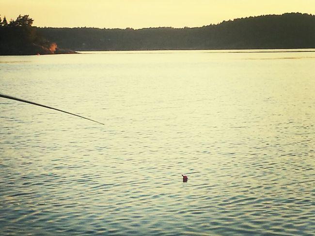 Waiting for something Fishing Summer ☀