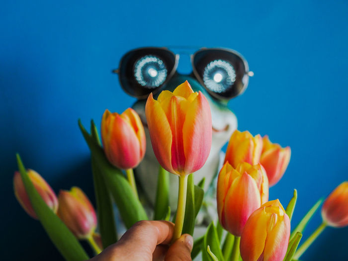 Cool Man Dream Frog Fun Glasses Man Retro Shining Toad Tulips Valentine Valentine's Day  Blue Background Bunch Of Flowers Close-up Flowers Gentleman  Glow Glowing Eyes Hipster Orange Color Present Prince  Sunglasses Turquoise