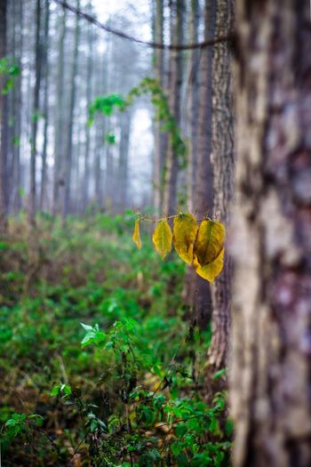 Nature Forest Tree Plant Leaf Outdoors Day Beauty In Nature Blätter Herbstlicht Bäume Trees