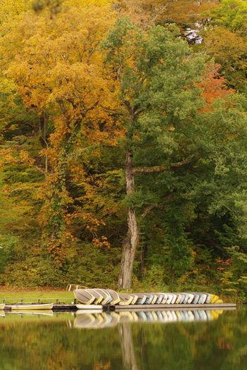 秋の風景 秋 紅葉 松原湖