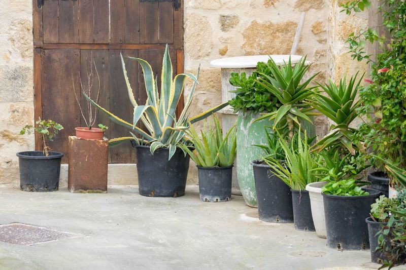 Succulents Potted Plant Plant Growth No People Day Architecture Outdoors