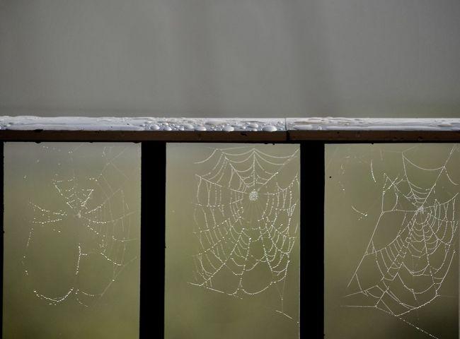 Spider Web Close-up No People Outdoors Spiderweb In Morning Dew Three Spider Webs Spiderwebs Day