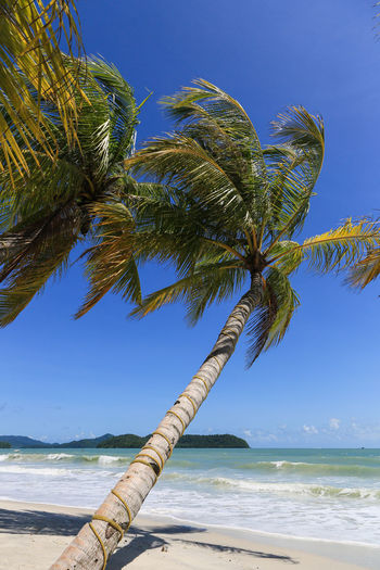 Pantai Cenang beach on the tropical island of Langkawi in Malaysia just south of the Thai border in the Andaman sea in Southeast Asia ASIA Beach Beauty In Nature Blue Cenang Cenang Beach Clear Sky Day Horizon Over Water Island Langkawi Malaysia Nature No People Outdoors Palm Tree Scenics Sea Sky Tranquil Scene Tranquility Travel Tree Water Wave