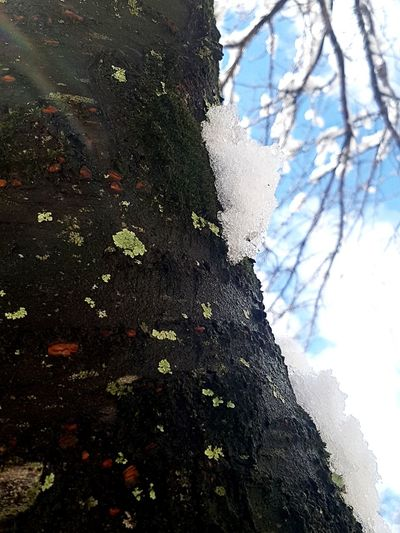 Snow Tree Dripping Branch Water Sky Close-up
