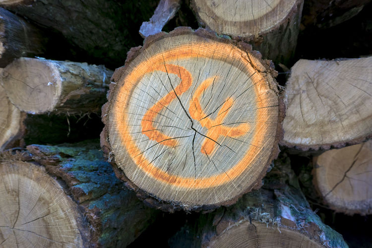 Close-up of stack of logs numbered '24' in forest in Berlin, Germany '24' Abundance Berlin Close-up Color Image Day Forest Forestry Industry Germany Horizontal Log Marking Nature Nature No People Number Outdoors Photography Stack Timber Tree Tree Trunk Wood - Material