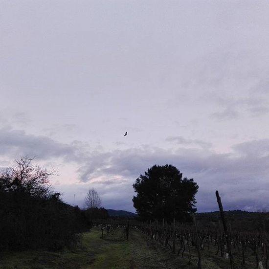 Paisaje Landscape árbol Tree Viña Ave Nubes Picoftheday Pic Pajaro Campo Instachile Good Nice