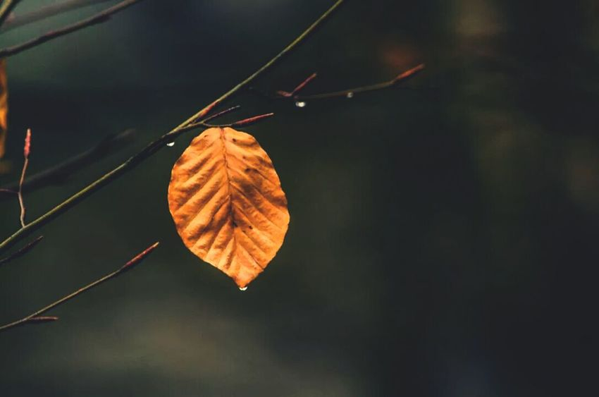 Autumn Leafs Autumn Colors Naturelovers Camping