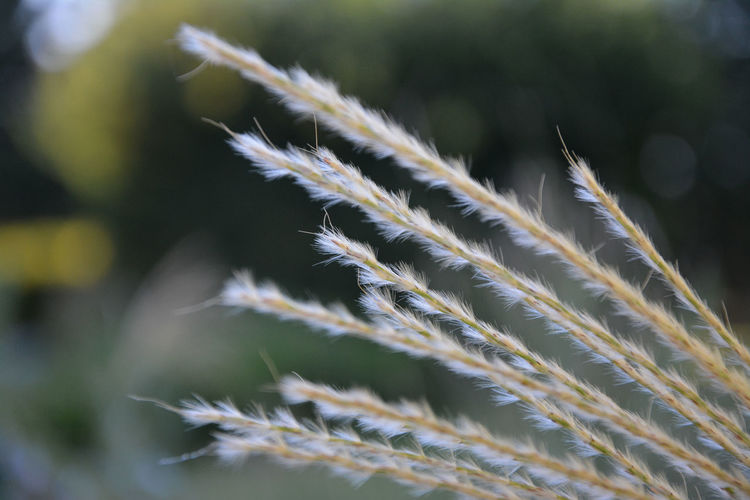 Beauty In Nature Close-up Day Focus On Foreground Freshness Grass Grass Family Leaf Nature Outdoors Plant Reed - Grass Family Scenics Selective Focus