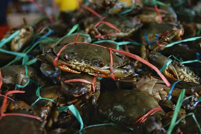 Close-up of crab for sale at market